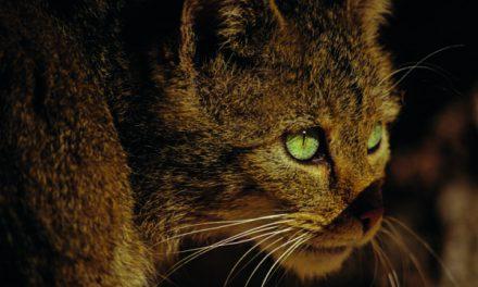Bericht vom Ausflug in das Wildkatzendorf Hütscheroda