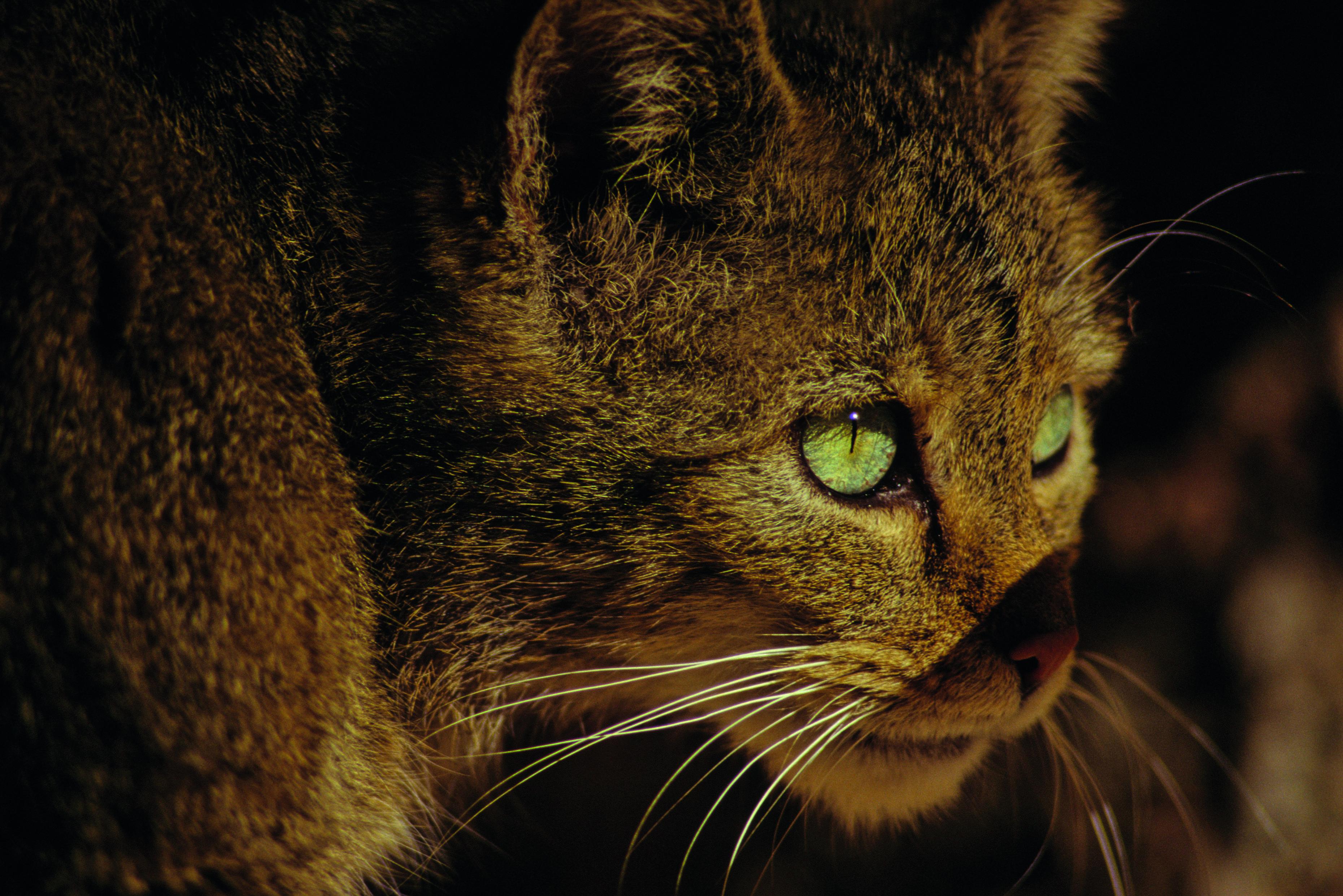 Wildkatzendorf Hütscheroda feiert einjähriges Bestehen