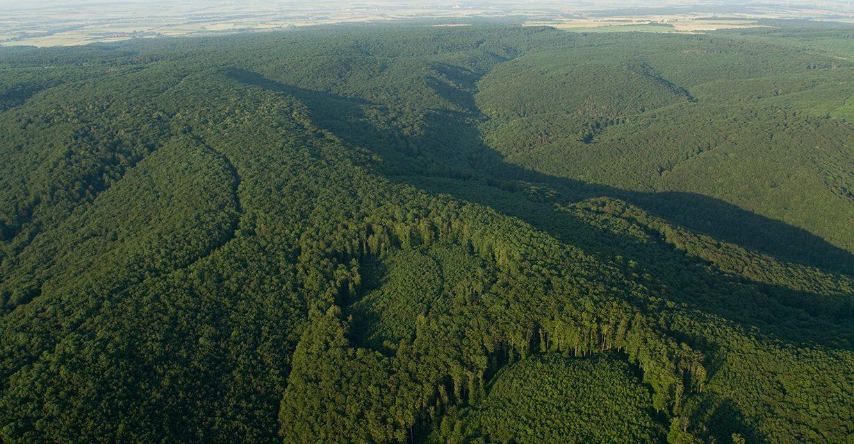 """Nationalpark Hainich  – """"Natur Natur sein lassen"""""""