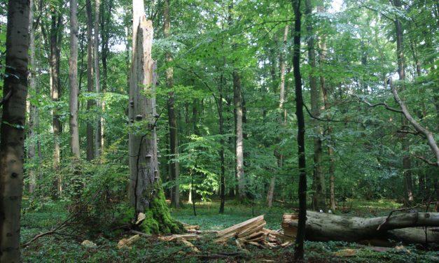 Waldbaden kommt dort an,  wo es wirklich gebraucht wird